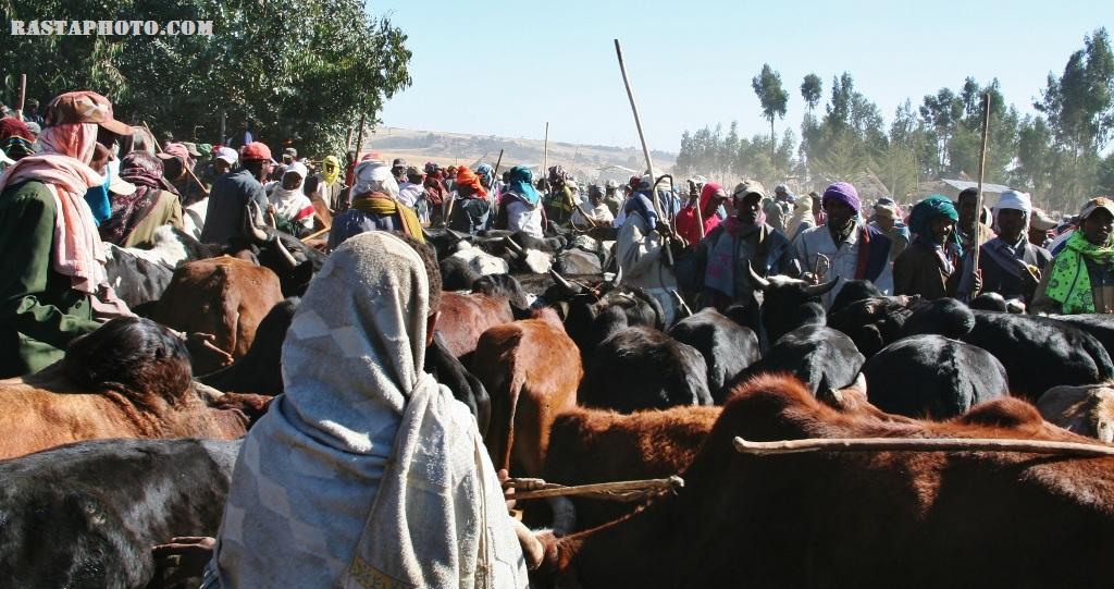 Debre Berhan Thursday Market